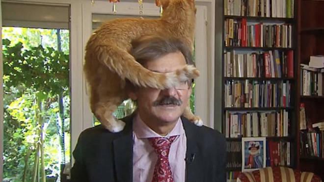 Cat interrupts TV interview