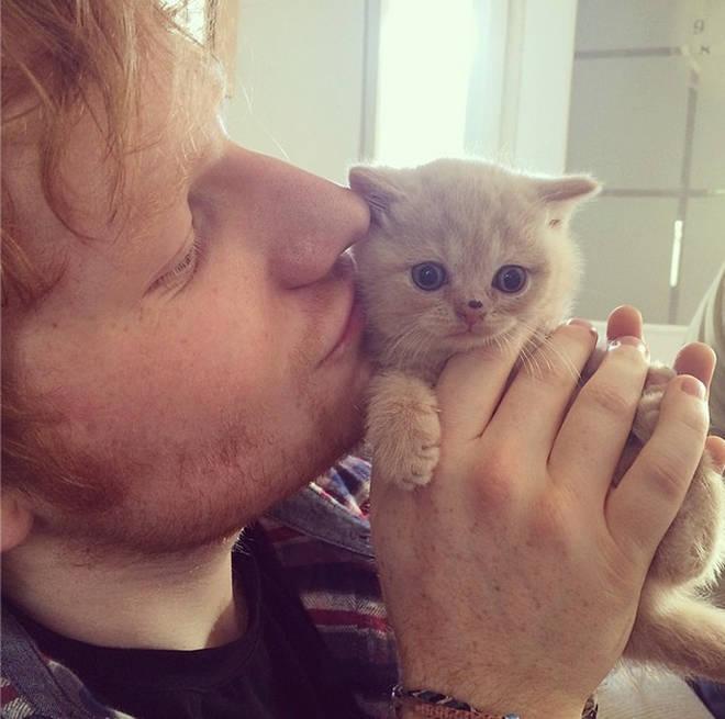 Ed Sheeran and cat