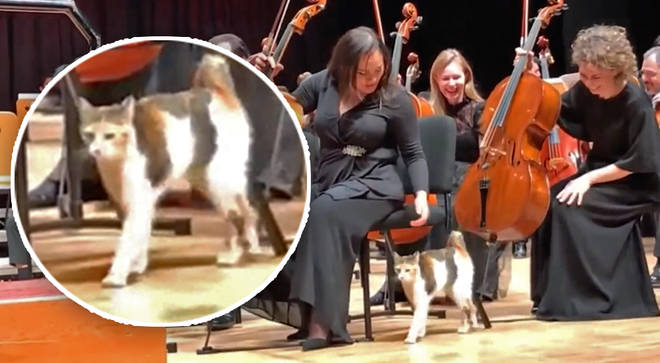 Stray cat interrupts orchestra performance in Istanbul