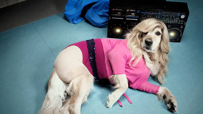 Madonna album covers given dog makeover