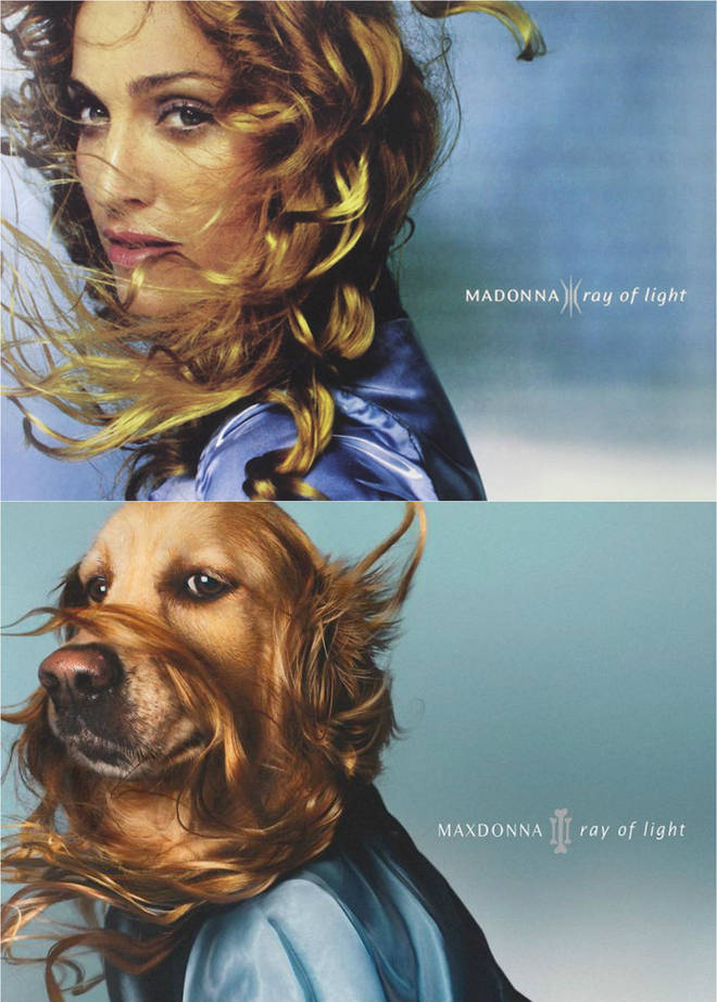 Madonna album recreated with dogs