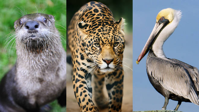 QUIZ: How many of these obscure animals can you name? - Smooth