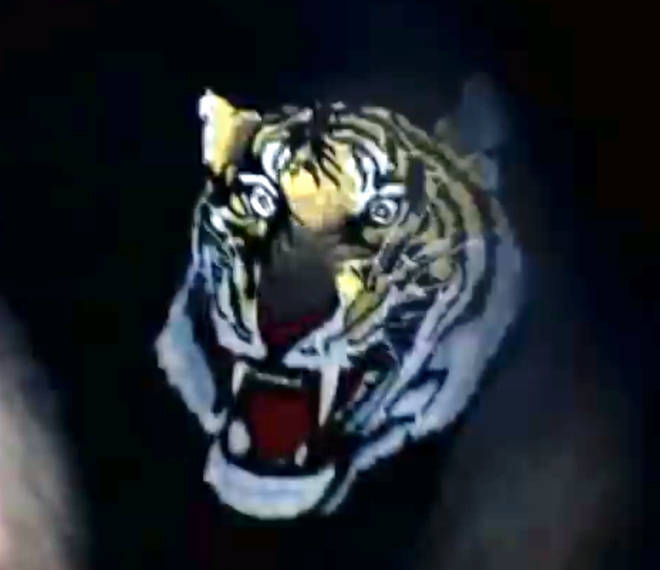 A close-up of the tiger briefs worn by Robbie Williams in 'Rock DJ'