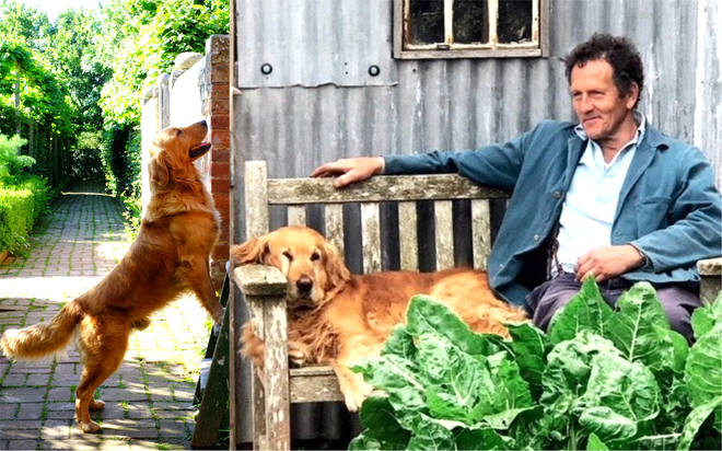 Monty Don shares emotional tribute to mark his late dog Nigel's 12th birthday