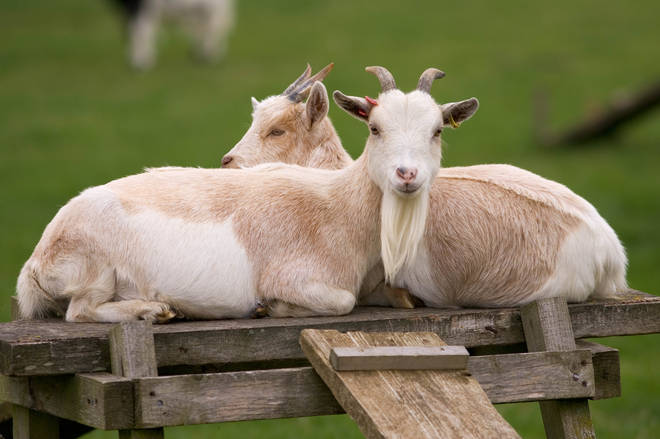 The farm in Abergele, North Wales said it would be closing for the remainder of 2020 due to filming commitments (stock image)