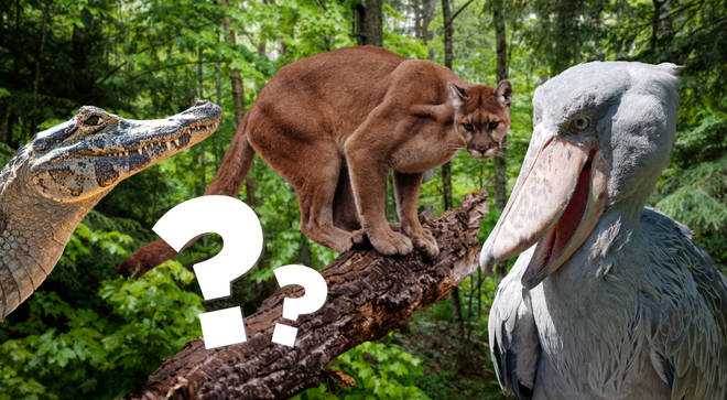 Can you name these obscure animals?
