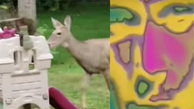 Deer/Phil