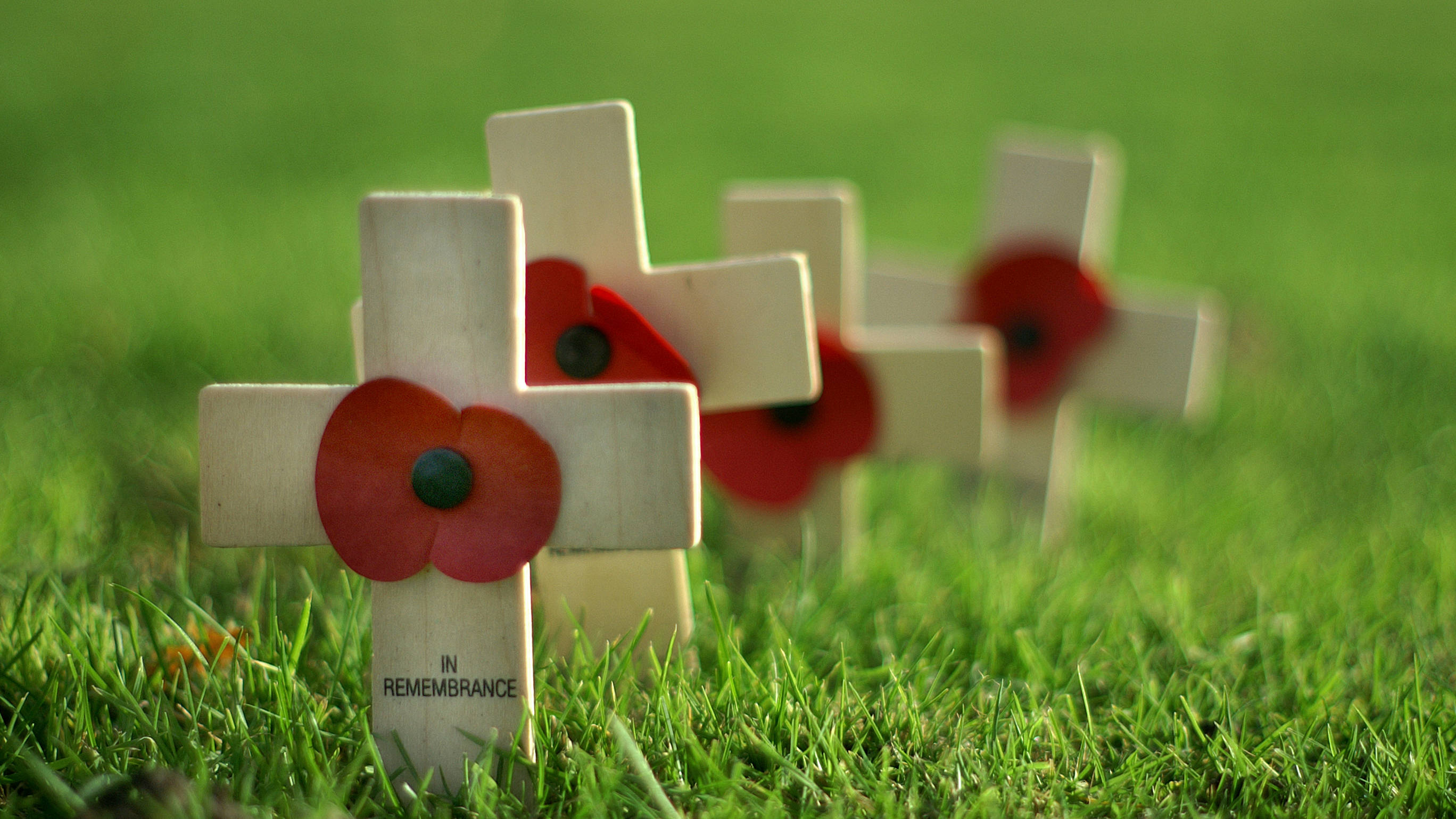 Why do we wear poppies on Remembrance Day and what are white