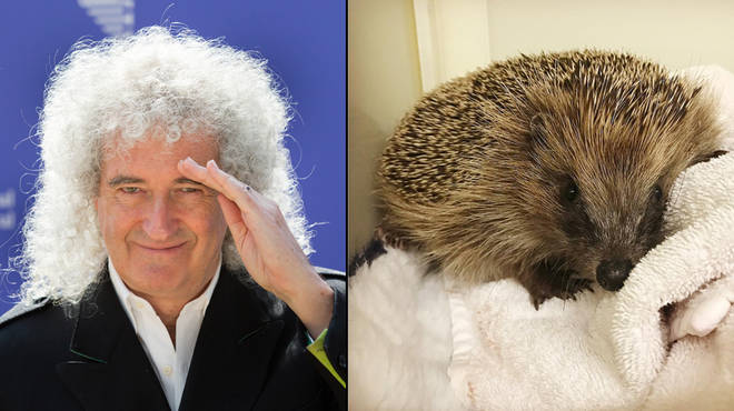 Brian May has helped Phil the hedgehog on his road to recovery