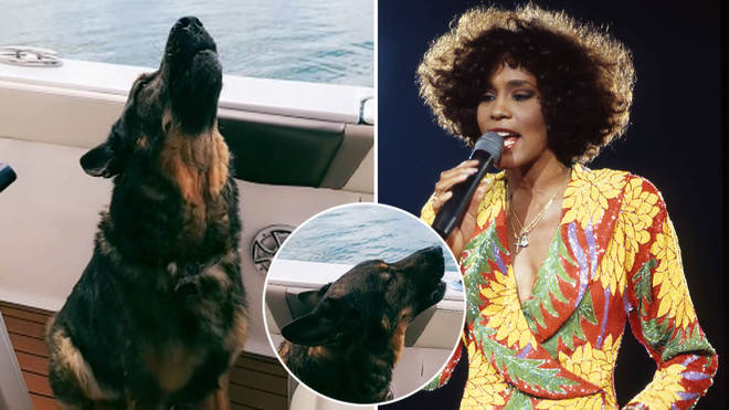 A dog has belted out Whitney Houston's classic