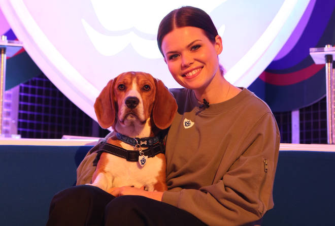 Basset/Beagles cross Henry has joined Blue Peter