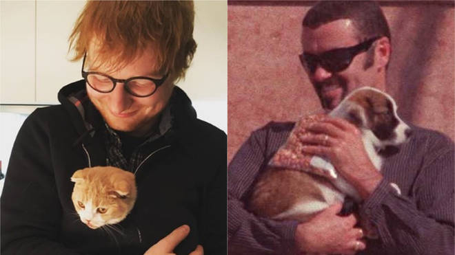 Ed Sheeran and George Michael with their pets