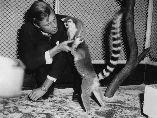 Sir David Attenborough with two ring-tailed lemurs during a Christmas lecture at London zoo
