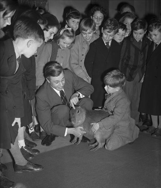 Attenborough introduces a Capybara to children Royal Geographical Society in Kensington Gore, London, 2nd January 1956