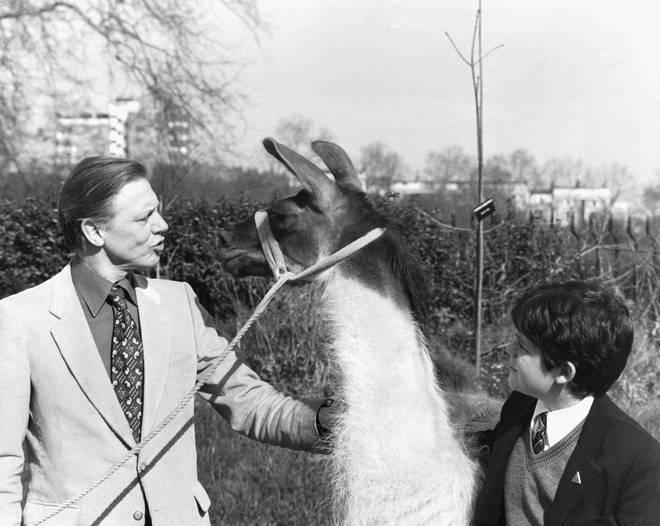 David Attenborough shows 12-year-old Patrick Flynn from Kent a Llama called Charlie, at London Zoo