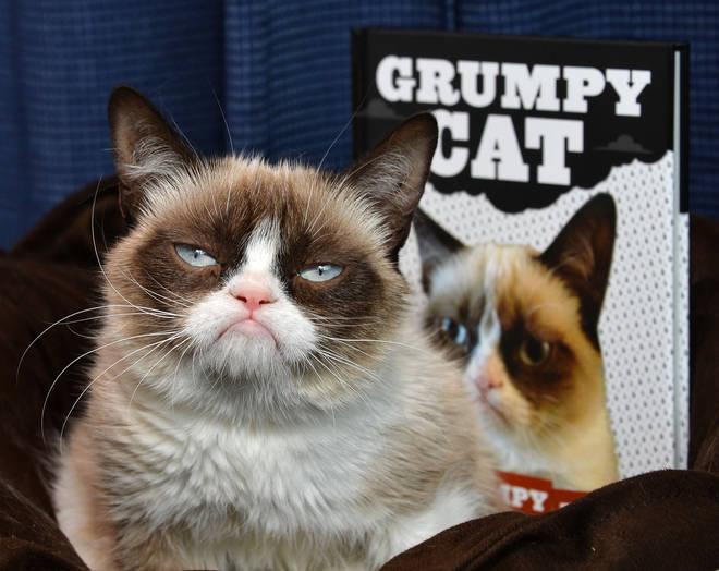 Grumpy Cat Makes Appearance At Kitson Santa Monica
