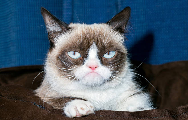 Grumpy Cat has died aged 7