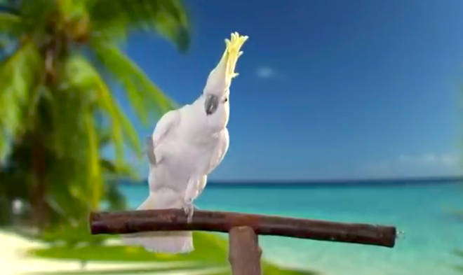 Cockatoo takes on Queen in hilarious Freddie Mercury tribute - watch it here